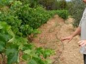 Nace #Quàntic, nuevo vino @CellerMuntanya
