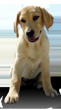 Dieta ACBA: Al perro lo que es del perro