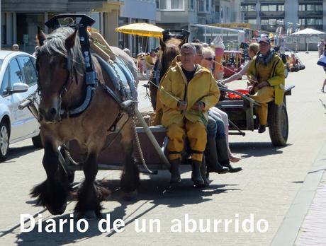 incomodidad del caballo uruguay en vivo