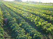 alternativas agricultura ecológica