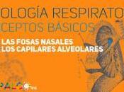 Fisiología respiratoria: conceptos básicos