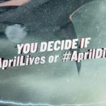 Sharknado-Frikarte-AprilLives