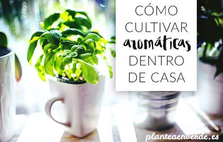 C mo cultivar hierbas arom ticas dentro de casa paperblog - Plantas aromaticas interior ...