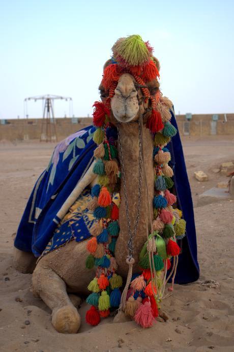 Camello Desierto Irán