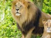 combatirá caza furtiva especies amenazadas