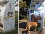 Crean primera maquina alimenta animales callejeros cuando donas botella plástico vacía