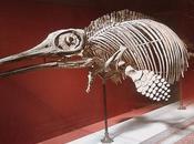 último ictiosaurio