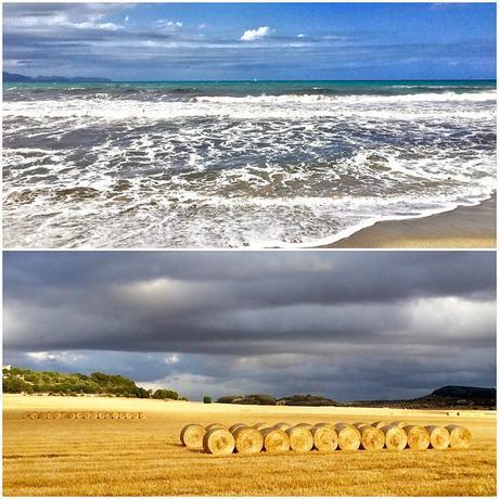 Mar i blat després de la pluja