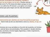 Alergias perros gatos#salud#mascotas#infografía