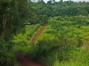 Reserva Biosfera Yabotí donde sonidos movimientos marcan ritmo este tesoro natural.
