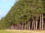 procesionaria pino: cómo podemos prevenir controlar