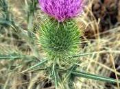 Algo botánica Sierra Norte