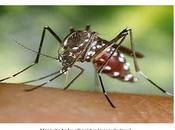 Infección virus Chikungunya