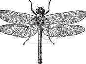 Moda para hogar: libélulas