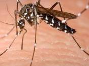 mosquitos tigre, pesadilla para nuestros veranos