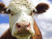 Alimentos contienen proteína leche vaca