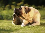 tipos ácaros perros comunes