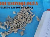 Arqueozoología: Estudiando restos fauna