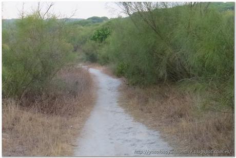 La senda que nos lleva hacia el destino