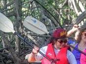 (17/8/15): Paleando entre manglares