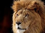 León demuestra porqué Selva