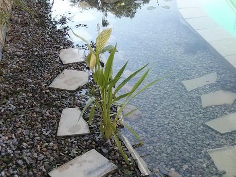 Como hacer una piscina natural paperblog for Filtro piscina natural