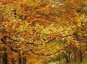 Escapadas ideales otoño