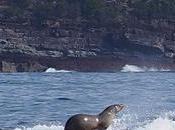 Foca surf ballena jorobada