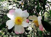 jardín Saleta Verano otoño, septiembre 2015. Saleta's Garden summer autumn, September 1-30,