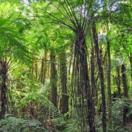 Los sonidos y movimientos marcan el ritmo de este tesoro natural: Reserva de Biosfera Yabotí.