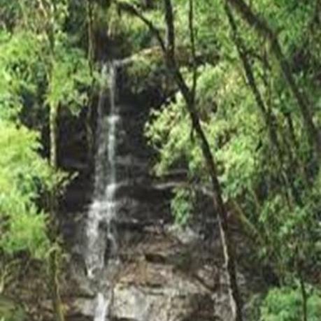 Parque Provincial Yatay creado para preservar los ecosistemas misioneros lindantes con las Cataratas del Iguazú.