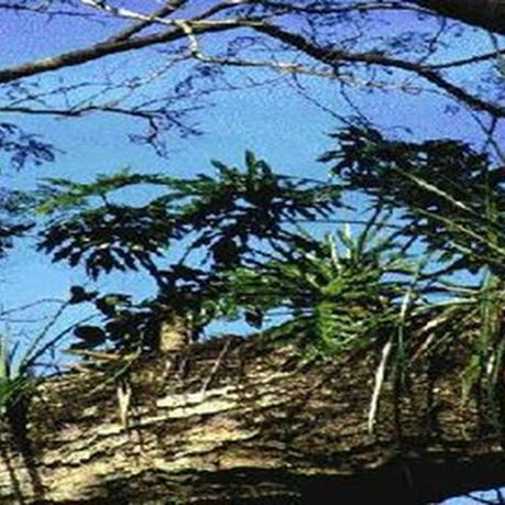 La Reserva Natural Estricta San Antonio mantiene un sector intacto de flora nativa.