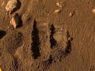 Varios organismos terrestres sobrevivirían en Marte durante meses