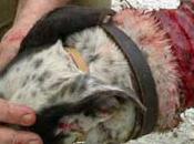 reducen casos maltrato animal