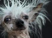"""Estos perros """"más feos mundo"""""""