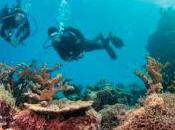 Gran Barrera Coral