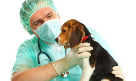 diagnostico de pancreatitis en perros
