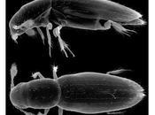 Confirmado insecto pequeño mundo