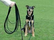 entrenamiento perro distancias