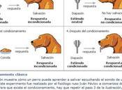 Beneficios Condicionamiento Pavlov Para Perro