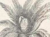 huevo Iguanodon (Robert Duncan Milne) (II)