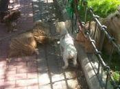 Odio parque perro (por Ana)