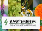 todoterreno plantas medicinales