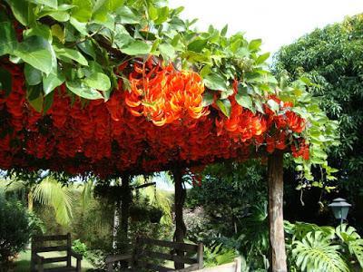 Pérgola Decoración De Jardines Paperblog