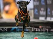 Dortmund nuevo anfitrión campeonato europeo buceo perros