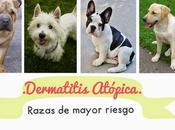 alergias perro