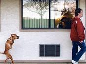 asombrosa historia Faith, perra bípeda