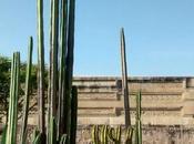 Mitla, Ciudad Muertos, Árbol Tule
