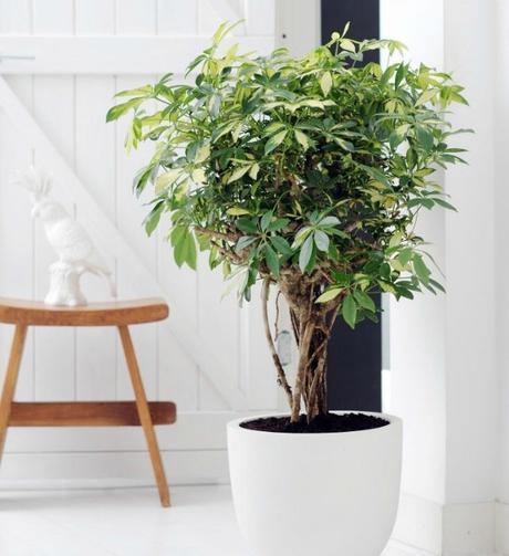 10 Mejores Plantas De Interior Paperblog