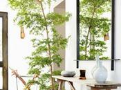 Mejores plantas interior